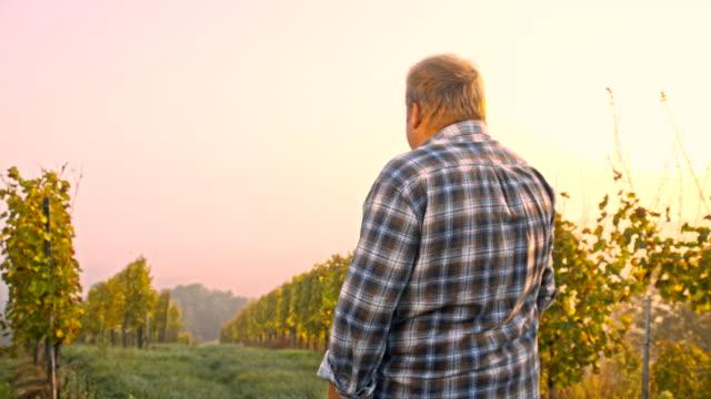 TS Winegrower Walking In The Vineyard