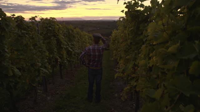 Winegrower walking in the vineyard
