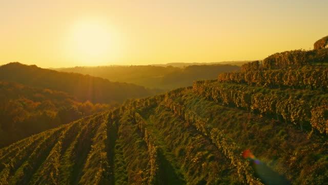 aerial wine-growing district of prekmurje - grape stock videos & royalty-free footage