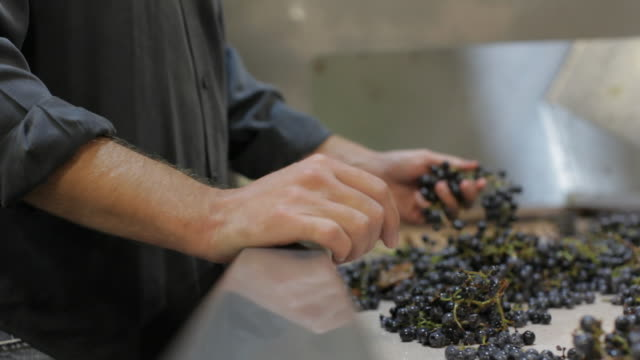 winemaking - sorting grapes - glove stock videos & royalty-free footage
