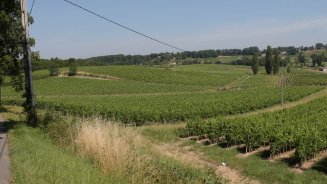 wine-road near bordeaux - aquitaine stock-videos und b-roll-filmmaterial