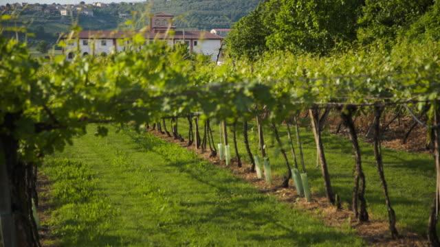 vídeos y material grabado en eventos de stock de a winery hides over the vineyard - hoja de la vid
