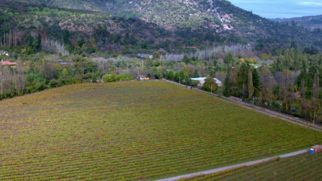 wineyard in pirque chile - weinberg stock-videos und b-roll-filmmaterial
