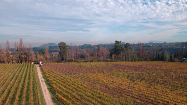 vídeos de stock, filmes e b-roll de wineyard in pirque chile - vino