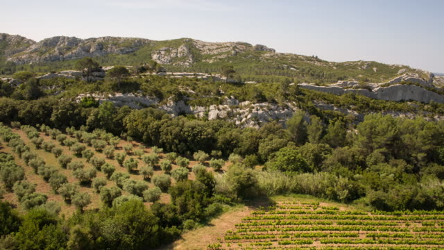 Wineyard in Provence