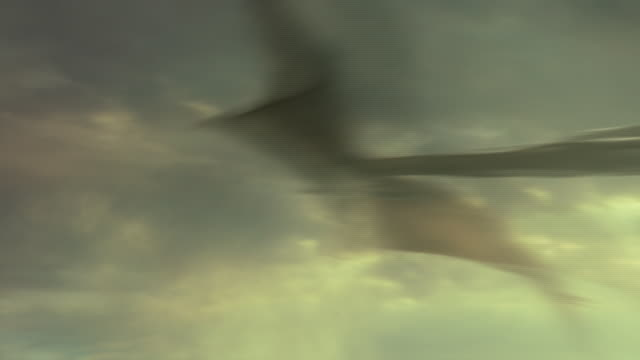 a winged dinosaur flies across a cloudy sky, then lands with its wings spread wide in a computer generated animation. - gliedmaßen körperteile stock-videos und b-roll-filmmaterial