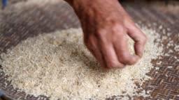 winnowing rice, nature Thai farmer's way of life.