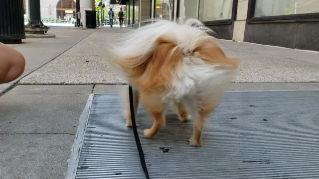 vídeos de stock e filmes b-roll de winston was casually enjoying a leisure stroll down the streets in milwaukee, wisconsin when he encountered his first street vent. it was love at... - raça pura