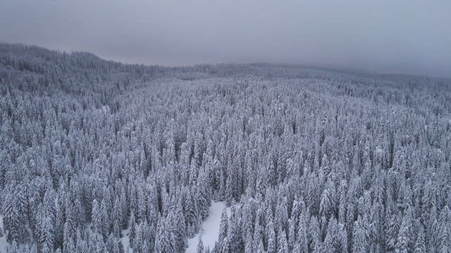 winter aerial over the snow-covered pine woodlands.  ski vacations in the mountains. - pinaceae stock videos & royalty-free footage