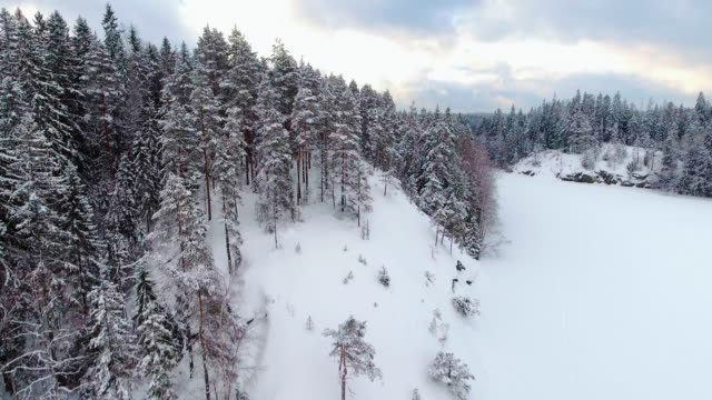 winter aerial views in snowy forest - national park stock videos & royalty-free footage