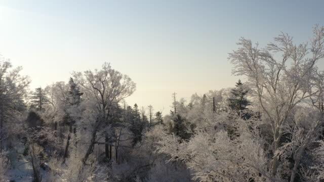 冬の高山ワンダーランド - winter点の映像素材/bロール