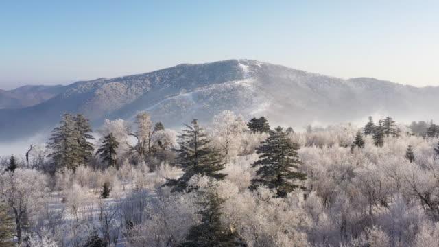 winteralpenwunderland - traumartig stock-videos und b-roll-filmmaterial