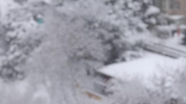 vídeos y material grabado en eventos de stock de invierno y nieve. en la ciudad, nevando a través de los árboles - pinar