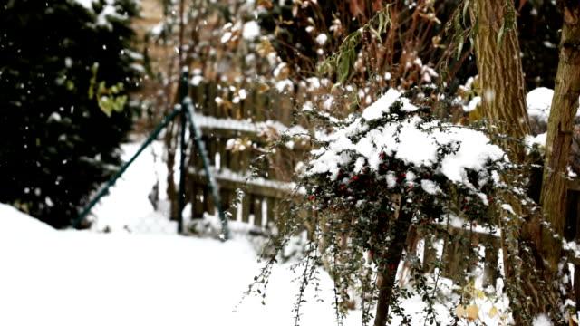 stockvideo's en b-roll-footage met winter berries - middelgrote groep dingen