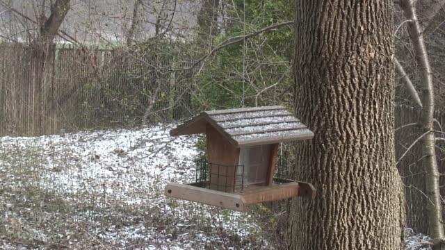 Winter birdhouse - HD 1080/60i