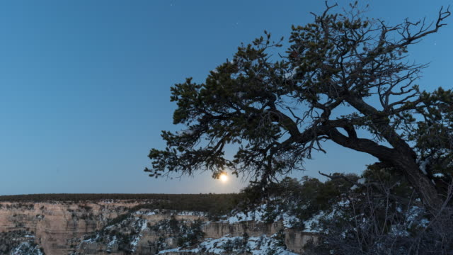 A winter day to night time lapse of the view  from the El Tovar Hotel overlook on the South Rim of the Grand Canyon (Arizona, USA) featuring the moon rising over the horizon, slightly obscured by a Juniperus osteosperma (Utah Juniper).
