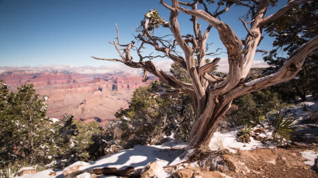 A winter daytime time lapse of the view from Hermit's Rest on the South Rim of the Grand Canyon (Arizona, USA) prominently featuring a dead Juniperus osteosperma (Utah Juniper) in the foreground with light snowcover on the ground and slow moving clouds in