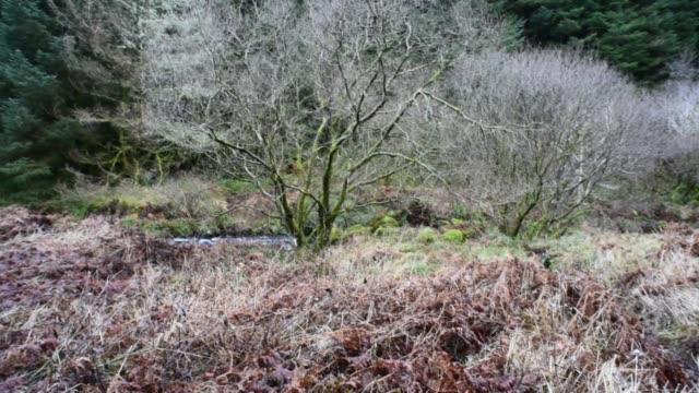 winter deciduous woodland in ayrshire, scotland. - david johnson stock videos & royalty-free footage