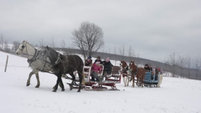 Winter Diversity Multi-Generation Family Horse Sleigh Snow Ride