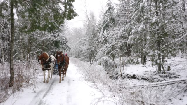 winter diversity multi-generation family horse sleigh snow ride - all horse riding stock videos & royalty-free footage
