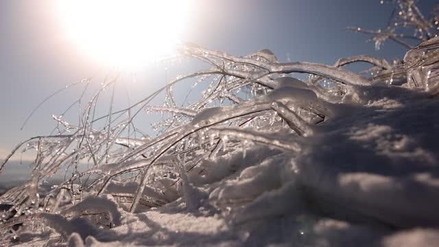 冬のおとぎ話 - 枝点の映像素材/bロール
