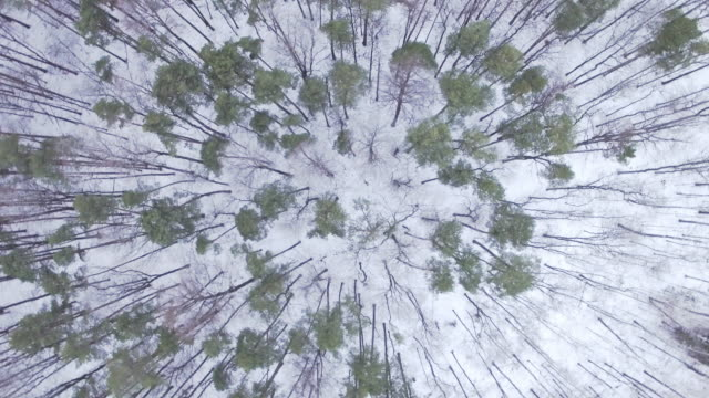 Winter forest - aerial view