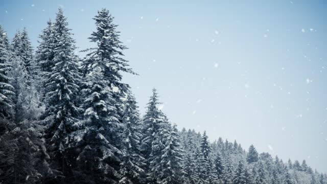 Winter-Wald-Textfreiraum, Endlos wiederholbar