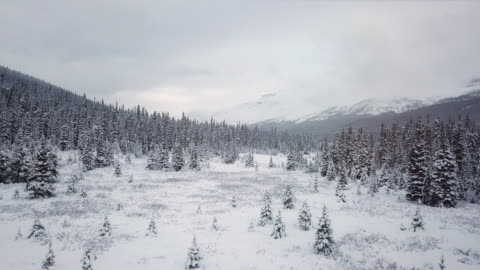 winter forest in the snow - pine tree stock videos & royalty-free footage