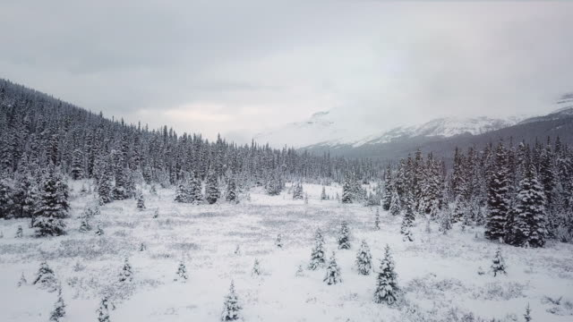 winter forest in the snow - overcast stock videos & royalty-free footage