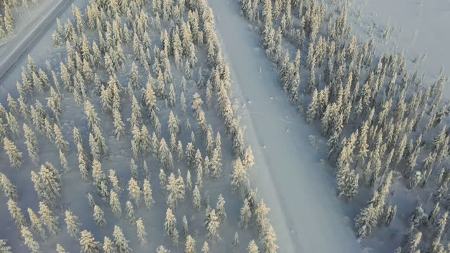 winter forest in the snow - pinaceae stock videos & royalty-free footage