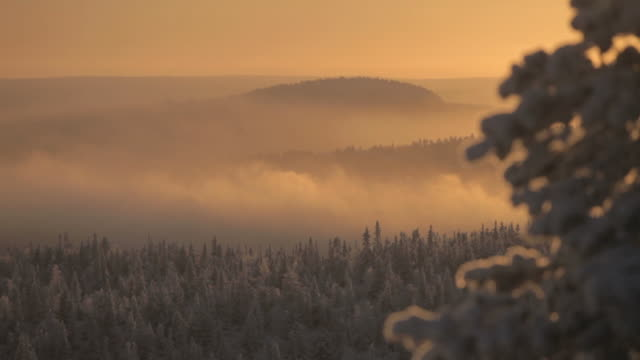 w/s winter forest in the sun - finlandia video stock e b–roll