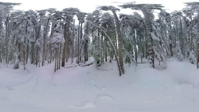 Winter Forest Scene, Oregon