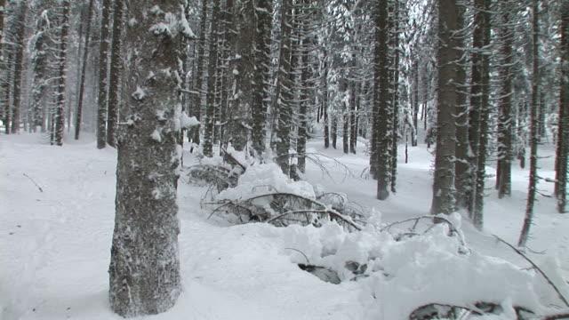 STEADYCAM HD: Floresta de Inverno