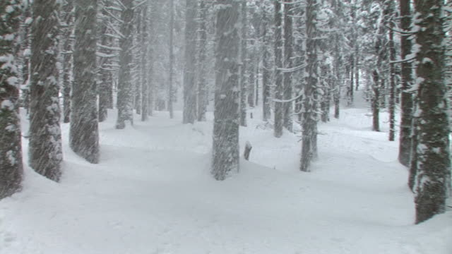 hd steadycam: winter forest - spruce tree stock videos & royalty-free footage