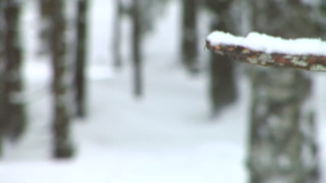 hd: winter forest - twig stock videos & royalty-free footage