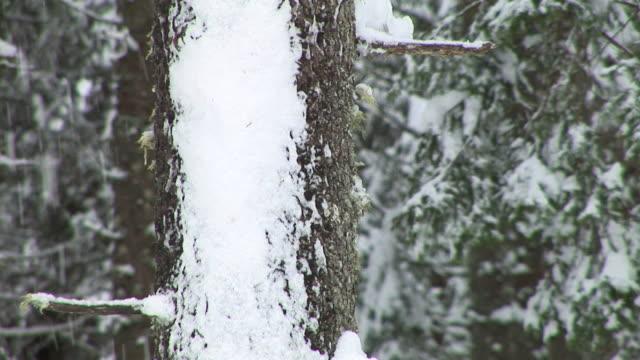 vídeos y material grabado en eventos de stock de hd: bosque de invierno - aguja parte de planta
