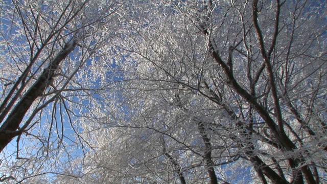 hd: foresta invernale. - area selvatica video stock e b–roll