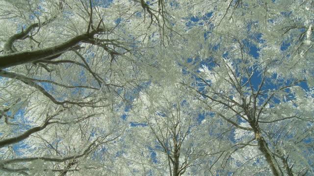 vídeos y material grabado en eventos de stock de winter forest - vista ascendente