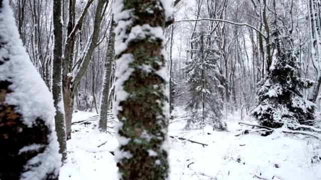stockvideo's en b-roll-footage met winter forest - berk