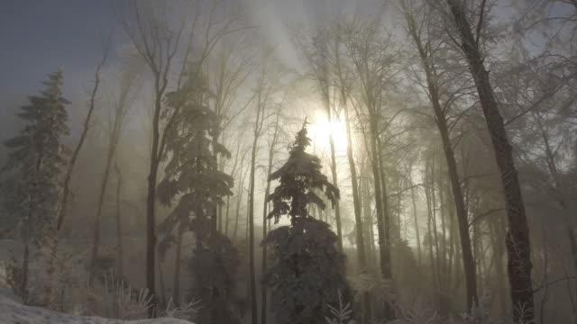 winter forest - 40 seconds or greater stock videos & royalty-free footage