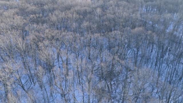 foresta invernale - albero spoglio video stock e b–roll