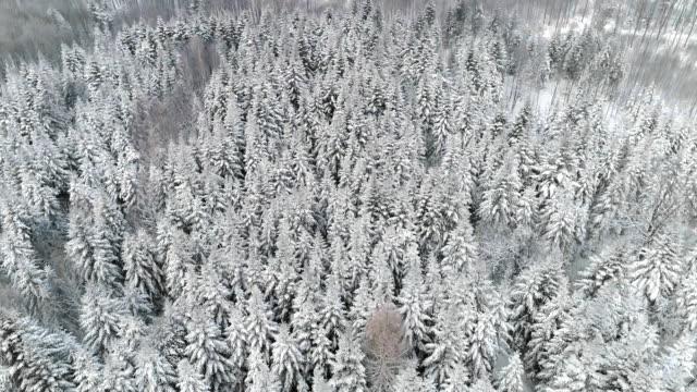 winter forest/debica/poland - podkarpackie voivodeship video stock e b–roll