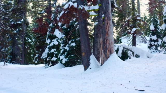 winter im wald. die kamera bewegt sich rückwärts entlang der spur. - andersherum stock-videos und b-roll-filmmaterial
