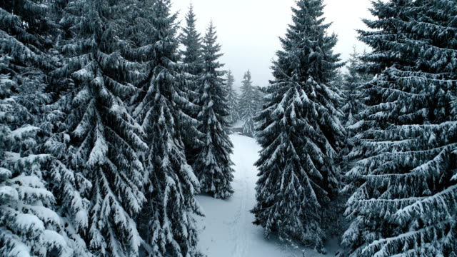 winter in mountain - evergreen stock videos & royalty-free footage