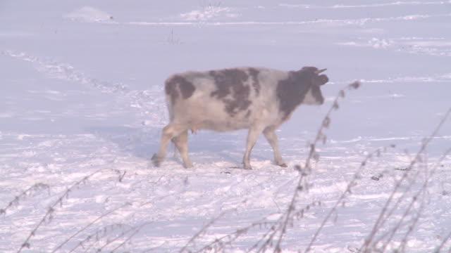 winter in village - farm stock videos & royalty-free footage