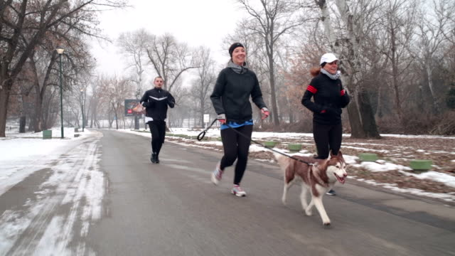 winter jogging with a dog - five people stock videos & royalty-free footage