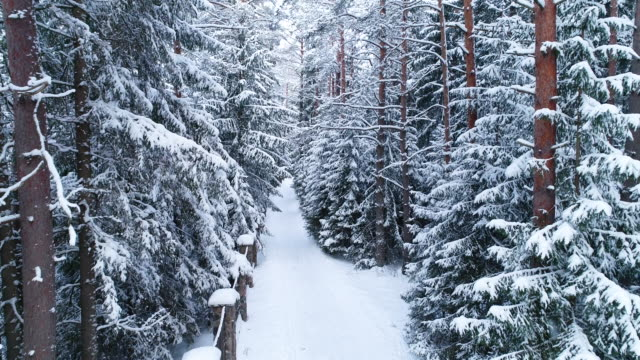 winter landscape. aerial view of road in winter - pinaceae stock videos & royalty-free footage