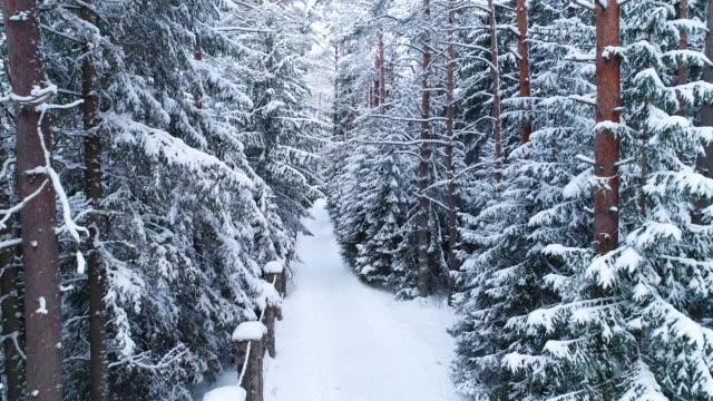 vídeos de stock, filmes e b-roll de paisagem de inverno. vista aérea da estrada no inverno - pinhal