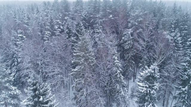 Winterlandschaft. Luftbild