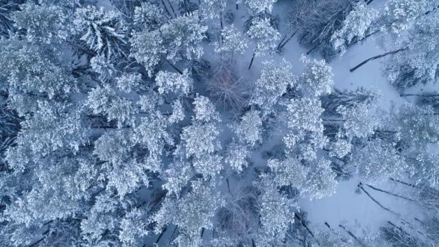 winter landscape. aerial view. - frost stock videos & royalty-free footage